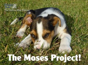 puppy training - the moses project