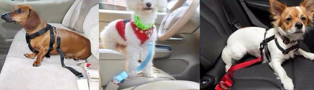 dogs-seat-belt-in-operation