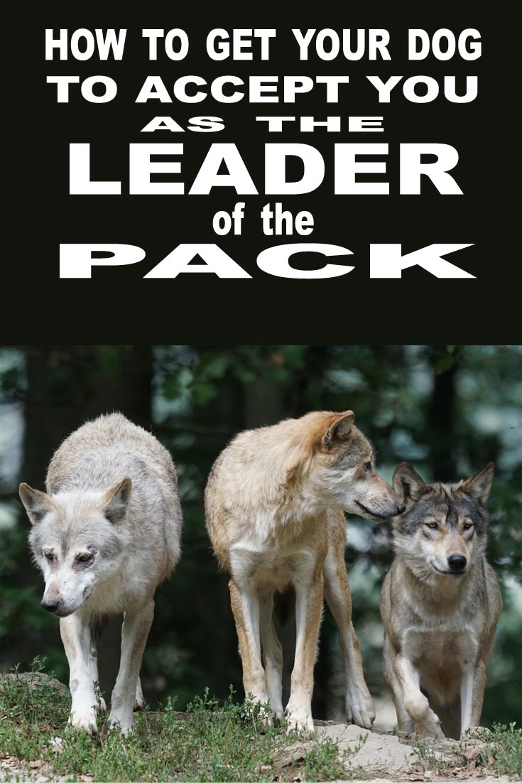 HOW TO BECOME THE LEADER OF THE PACK